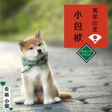 B C [ сейчас в надичии ] дрова собака шарф династия тан трава домашнее животное китти собака от семья из идти фасоль помогите пакет Автор пакета завернутые в ткань продаем подушка