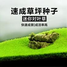 Аквариум декоративный водный семена водный грязь назад вид трава действительно завод бездельник ландшафтный дизайн без два окисление углерод легко живая
