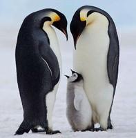 小企鹅宝贝冻品店LOGO