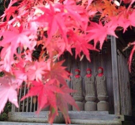 【欢欢的日本代购店】_带你进入