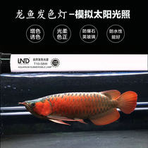 Fishery special professional Dragon fish lamp special Goldfish fish tank red dragon fish Color lamp lighting lantern Dragon Fish Hair Color lamp