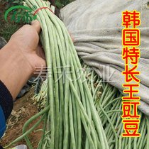 High-yielding cowpea seed boutique Korean special features Wang Green general green stripes long beans early spring vegetables