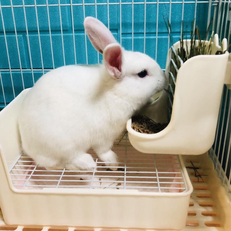 Lasg rabbit туалет горшок анти-распыления мочи домашних животных дракона кошки норки свинок без песка мочеиспускательный горшок горшок кролика поставок