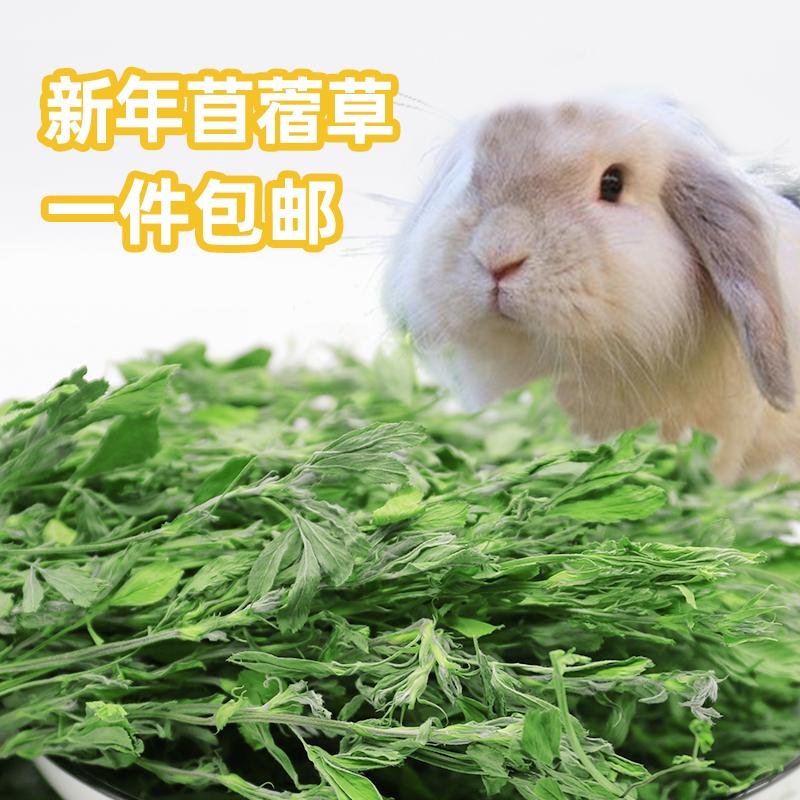 Зеленая новая альфальфа выпекает альфальфа сено кролика корма голландский свиной кролик травы