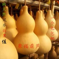 Gourde naturel spécial tout le monde vivant ouvert Fengshui ville Maison de mal chanceux Gourde ornements vraiment Gourde pendentif avec un leader