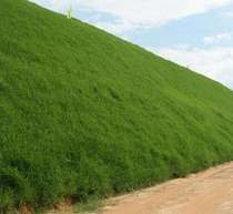 Slope protection grass grass seed grass seeds green lawn seeds Four Seasons green drought Resistance heat protection Wang