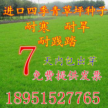 Turf seeds Four Seasons Green seed does not trim dog root slope protection green grass high sheep grass wheat straw seed greening
