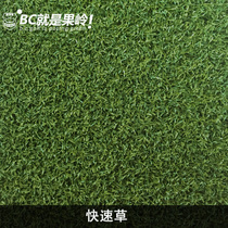 Golf lawn Kwo Ling grass fast grade horticultural decorative grass soft grass customizable