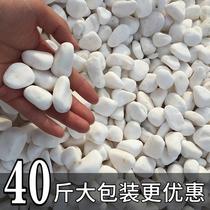 天然白石子庭院景观铺路鹅卵石鱼缸多肉盆栽铺面装饰白色大小石头