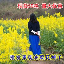 Rapeseed landscape ornamental rapeseed seeds high yield can be squeezed rapeseed seed flower sea must-have flower seeds