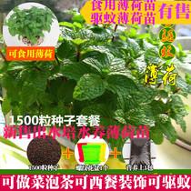 Edible mint lemon mint mosquito-repellent grass seedling cat mint nine-storey pagoda basil seed vanilla flower potted green plant
