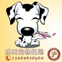 Shunxin national pet consignment agent procedures shunfeng car aircraft air mail transport door-to-door service.