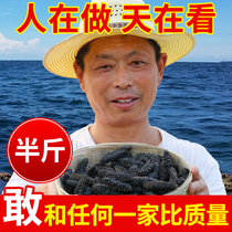 Old fisherman Dalian Wild Sea cucumber Dried goods 250g dry sea seepage half Jin gift box fresh non-ready-to-eat Liao Ginseng