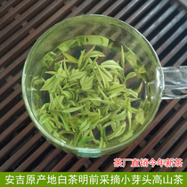 Authentic Anji White tea 2018 New tea Mingqian Premium rare tea green tea 100g spring tea bulk