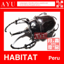 Ares grande poche insectes insectes artisanat matériel Musée collection éléphant Poche coléoptère Art Conception mois insectes Youpin