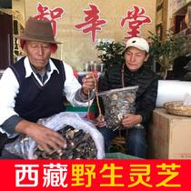 Tibetan speciality Reishi wild authentic Linzhi Chi Lingzhi grass reishi slice wild little Reishi whole branch 250 grams pure