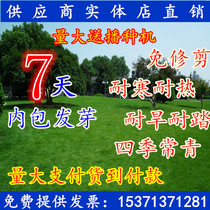 Lawn seeds United States Four Seasons Green lawn dog root grass seed Court yard slope protection grass seeds not trimmed resistant to trampling