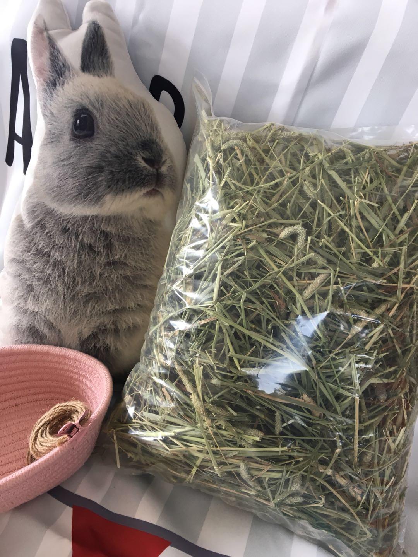 Польщенный канадский сорняк один щебетать моисей травы кролик голландский свинья дракон кошка шлифовка зубы Гатти сено 500г