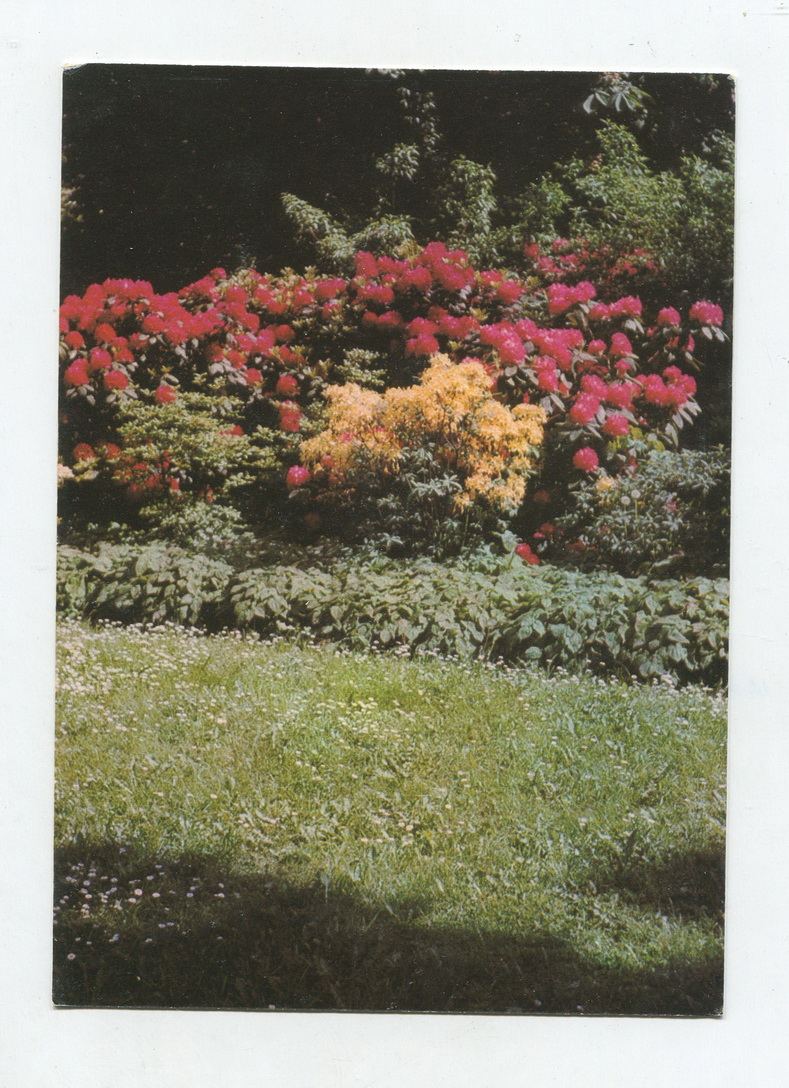 Unknown Age Germany Real Postcards Flower Garden Flower Stamps Fall Off