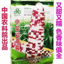 The sweet and waxy corn seeds are sweeter than 1:3 sweet and waxy sweet corn and waxy corn seeds.