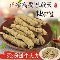 Authentic zhaoqing Gaoyao Wild Special 500g Guangdong orca Cistanche with male dry goods