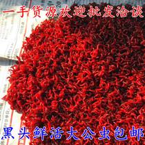 Living Red worm oversized male worm worm live bait bait pull bait crucian carp wild bait Zhejiang and Shanghai