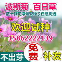 Perennial wildflower combination flower seeds Four Seasons easy sowing cosmos Hundred Days grass flower sea landscape courtyard Landscaping