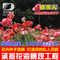 Poppies perennial flowers and flowers seeds Four Seasons flower garden flowers sea landscape flowering plant seeds