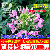 Flowers perennial flowers flowers flower seeds Four Seasons planting garden flower sea landscape flowering plant seeds