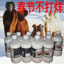 20 pounds of freshly squeezed camel milk Fresh milk Pure milk SF Air Xinjiang Kazakh pasture direct supply of camel raw milk