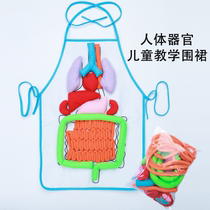 Amazon blasted childrens puzzle apron human organ apron childrens puzzle early teaching apron teaching apron.