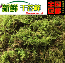 Natural dry moss water turtle Winter Sleep transport mat material dry moss Orchid Dendrobium plant grafting planting