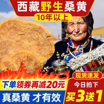 西藏野生桑树桑黄 桑黄菌种灵芝特级250g西藏自治区非500g