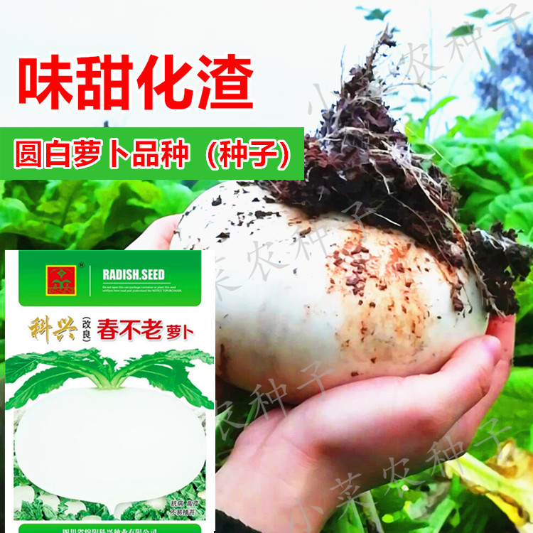 Sichuan spring is not old luo 蔔 crystal round white 蔔 seeds autumn and winter farmers idyllic vegetable seeds