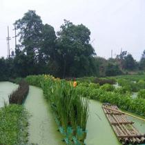 Floating grass green vegetable foam board to see aquatic plate foam block plant planting water green water is practical