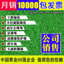 Lawn seed grass seeds grass seed of manila grass seeds of the Four Seasons Green do not trim dog root green turf
