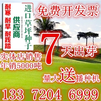 Import Four Seasons Green lawn seed tall fescue dog root ryegrass bluegrass resistant grass seeds
