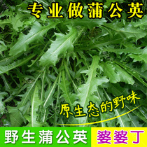 Wild dandelion seeds Autumn peasant seed Four Seasons mother-in-law Ding now spring and autumn potted garden vegetables