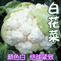Snow Emperor 68 days cauliflower seed cabbage flower seed Baihuanana Huayu Ruyi summer and autumn seed snow crown 60 days