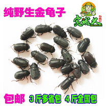 2018 Pure Wild Blind creator barged black beetle blind fat blind bump red babe Delicious