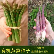 American Eagle brand asparagus seeds purple passion asparagus seeds purple asparagus seeds vegetable seeds 15 years of continuous mining