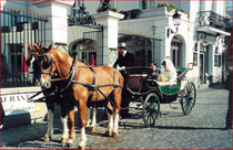 European twin horse-drawn car harness carriage accessories western giant Horse firm ()
