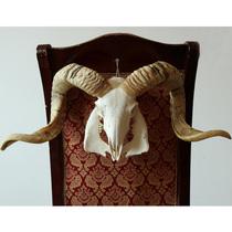 Tibets Natural pure handmade wall-mounted real sheep skull specimen sheep head decorative ornaments to attract financial characteristics handicraft gifts
