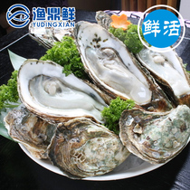 Fresh air fresh French N1 oyster instant fresh oyster delivery oyster knife