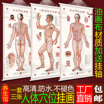 Traditional Chinese Medicine acupoint diagram Human Meridian acupoint Chart Large wall chart Health Museum poster moxibustion Acupuncture and massage poster painting