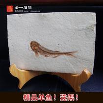 Liaoxi Paleontology Wolf fin fish fossil specimen Original plate Ornamental stone ornament Animal fossil raw stone delivery frame