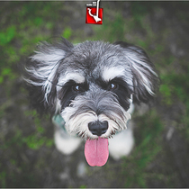 (that dog) Pet Professional Photography favorite Photo package Two