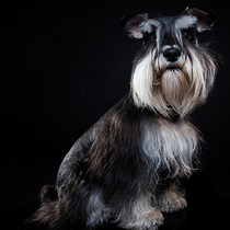 (that dog) Pet Professional photography favorite Photo experience Price