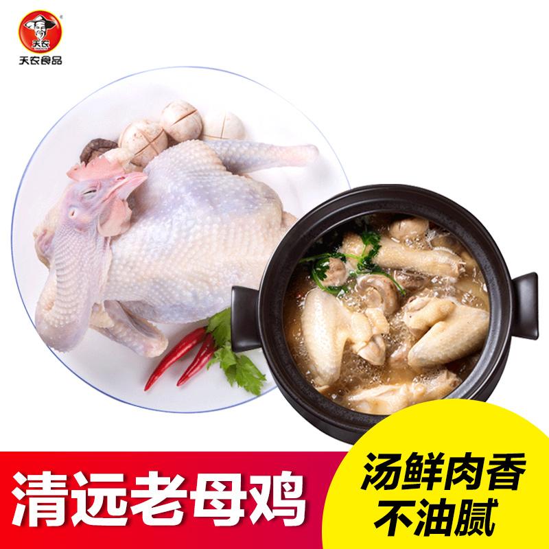 【天农】 散养老母鸡 土鸡正宗清远鸡 900g