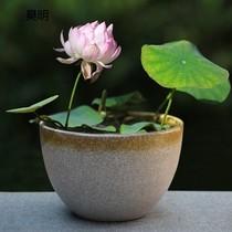 8寸高温陶瓷花盆水培简约大号碗莲铜钱草绿萝多肉金鱼缸无孔